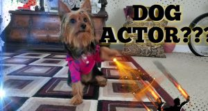 Dog Acting or Acting up? Cute & funny dog video