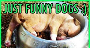 Funny Dog Win & Fail Compilation
