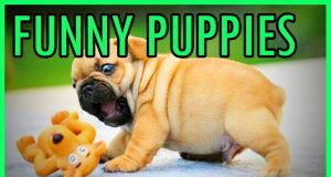 Puppies Being Puppies - Dogs Win Fail Compilation