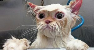 TRY NOT TO LAUGH - Funny Baby Animals Cats and Dogs Videos Compilation 2020 #114