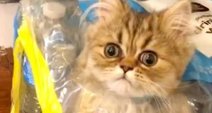 TRY NOT TO LAUGH - Funny Baby Animals Cats and Dogs Videos Compilation 2020 #127
