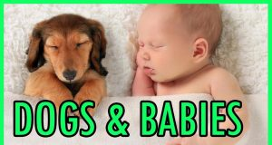 Cute & Funny Dogs with Babies Compilation