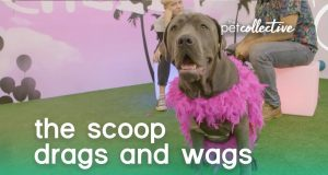 The Scoop: Drags & Wags | The Pet Collective