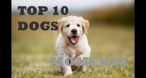 TOP 10 dog barking videos compilation 2020 | Funny dogs