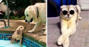 🎬 Cute cats and dogs compilation #7 | Funny animals video 😝