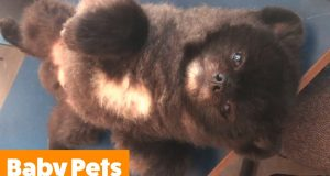 Cutest Kittens and Puppies   Funny Pet Videos