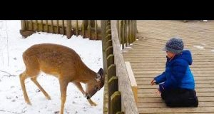 Funniest Kids playing with animals in the snow