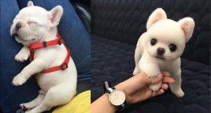 Şirin Yavru Köpek Videoları-Komik ve Eğlenceli(Baby Dogs-Cute and Funny Dog Videos Compilation)#2