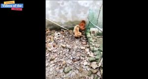 Chicken vs Dog Fight - Funny Dog Fight Video
