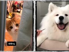 #4 Funny Cat and Dog Vines Compilation