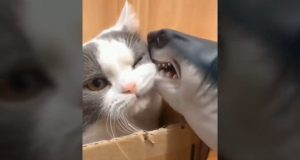 2020 Funny Cat & Dog/Cute Cat & Dog/Funny Pet/Compilation animali divertenti 24/웃기고 재미있는 강아지와 고양이