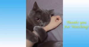 ANIMAL FAIL FUNNY AWESOME  Compilation!
