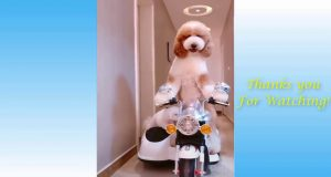 FUNNY AWESOME Cats and Dogs ANIMAL FAILS Compilation