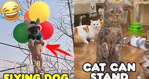 Funniest 🐶 Dogs And 😻 Cats - Try Not To Laugh 🤣 Funny Pets Compilation 2020