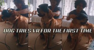 Dog Tries VR For The First Time! This Week On Tik Tok