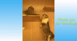 So funny cats اجمل قطط