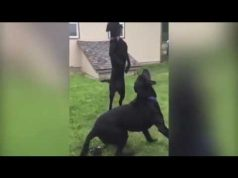 Dog fails compilation...try not to laugh😂😂😂😂