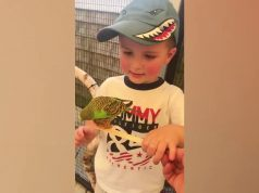 Funniest Baby and Baby Animals Fails   Fun and Fails Baby Video