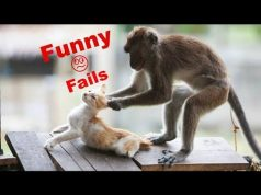 Cute Animals Funniest Fails Compilation 2020 | Cute and smart animals best funniest videos