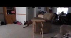Cat Dog wrc sound funny drift