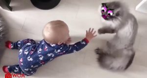 Funny cats and dogs video compilations #1 - baby animals💗