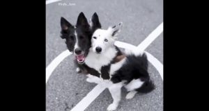 Top 15 cute pets, cute cats, cute dogs and other Animals