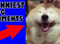 Ultimate Funny Dog Video Compilation 2020 | Best Dog Videos