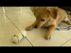 FUNNY VIDEOS!!! Cute dog and cat..best pets EVER !!