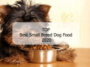 Top Best Small Breed Dog Food 2020 - Pet Care Plus