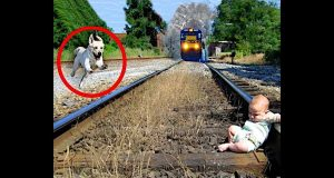 You Won't Believe This DOG Saves This BABY!
