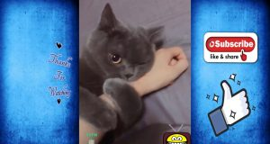 #7 The best funny compilations for pets animals