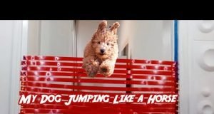 My Funny Dog Jumping Like a Horse