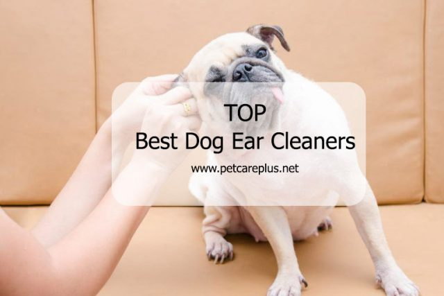 Top Best Dog Ear Cleaners