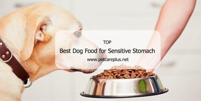 Best Dog Food for Sensitive Stomach
