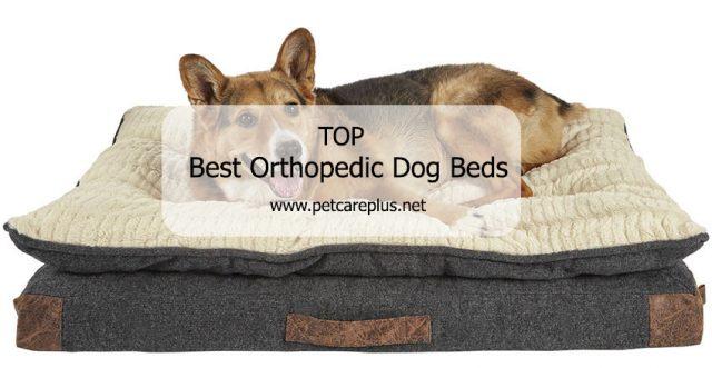 Top Best Orthopedic Dog Beds