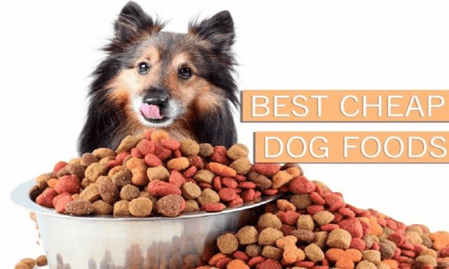 TOP 10 Best Cheap Dog Foods