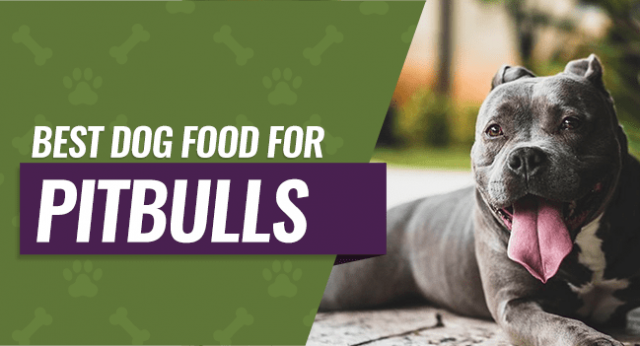 TOP Best Dog Food for Pitbulls