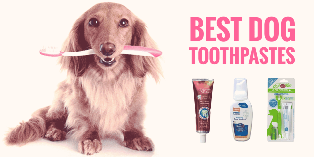 Best Dog Toothpastes in 2020 - Best Dog Products Reviews