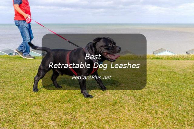 Best Retractable Dog Leashes in 2020 - Best Dog Products