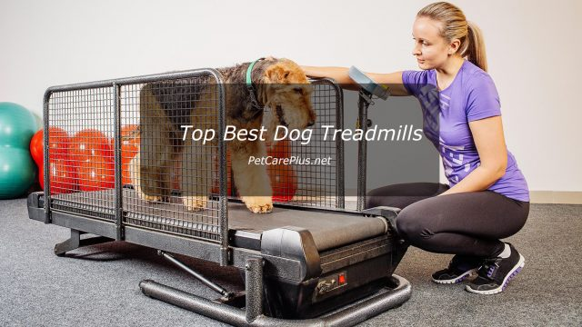 Best Dog Treadmills in 2020 - Best Dog Products Reviews