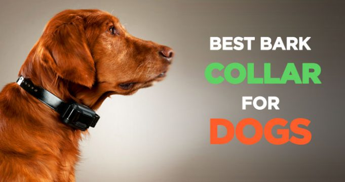 Top Best Bark Collars For your dog