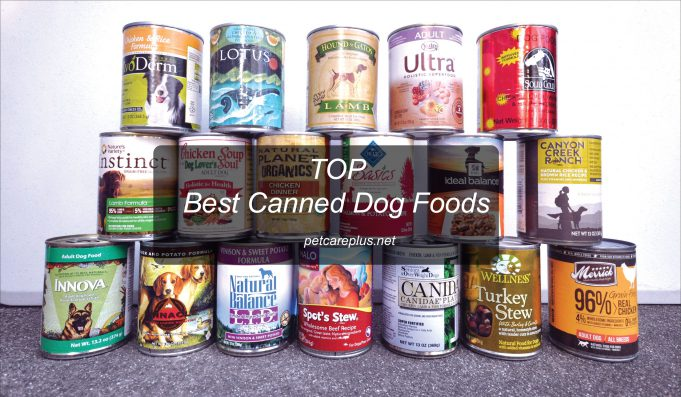 Top best Canned Dog Foods