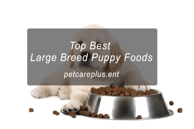 Top 10 Best Large Breed Puppy Foods