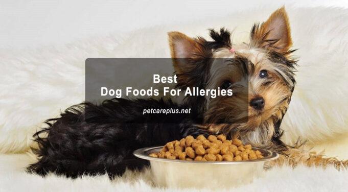 Best Dog Foods For Allergies